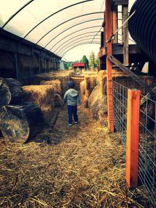 wilson lee farm